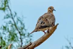 dove-and-grasshopper