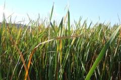 oglala_wetland