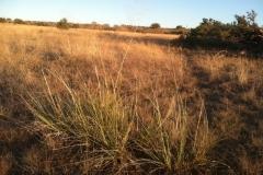 prairie-dog-landscape